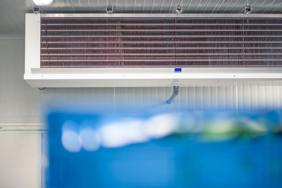 Koel- en vriescellen voor diverse sectoren